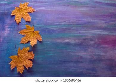 Farbiger Holzhintergrund mit trockenen Herbstblättern von Ahorn. Herbstkomposition.  Flat lay.