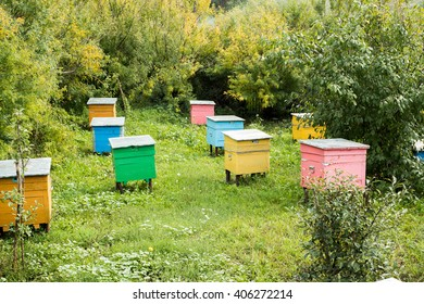 Colorful Wooden Bee Hives in a Garden
