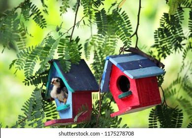 colorful wooden bird house with green background