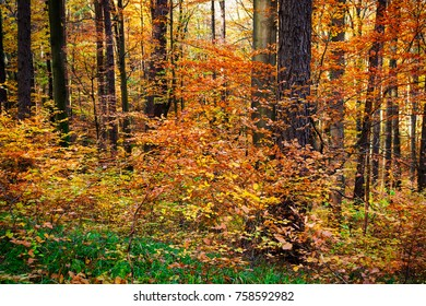 Colorful Woodland In Autumn, forest with deciduous trees
