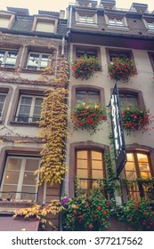 Colorful yellow autumn creeper growing on the building facade of a historic urban apartment block or townhouse with rows of windows