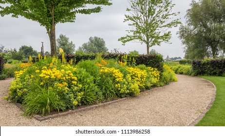 Colorful yellow flowerbed with different kind of blooming flowers