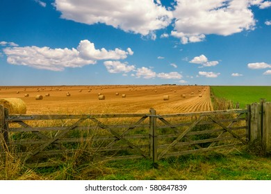 Colorful yellow and green meadow with hay bales and a beautiful blue cloudy sky. A wooden gate stands closed before the hay field.