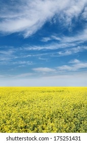 Colorful yellow oil rape in field with blue sky and clouds