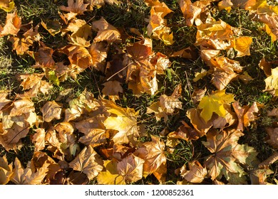 Colorful, yellow, orange and brown dried autumn leafs laying on the grass in the city park.