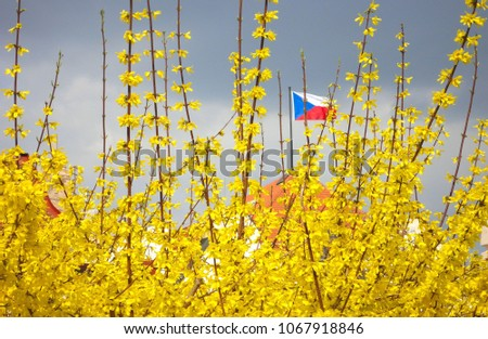 colorful yellow spring flowers and plants and plumb cloudy sky with national flag in Prague i Czech Republic