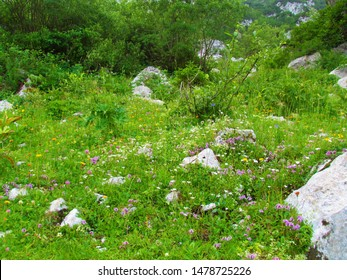 Colorfull alpine meadow covered with rocks and full white, pink and yellow flowers incl. breckland wild thyme (Thymus serpyllum) bellow Crna Prst in Slovenia - Shutterstock ID 1478725226