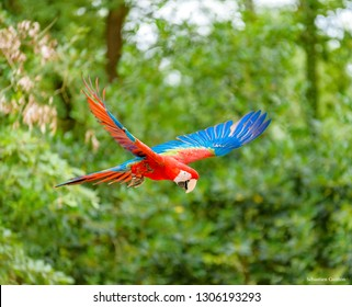 Colorfull parot is flying