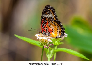 Colorfull Tropical butterfly in a garden