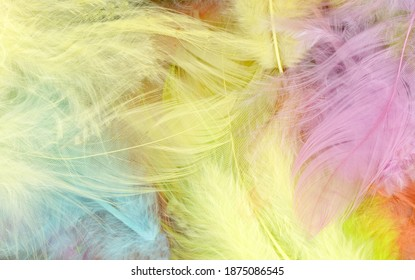 Colorfully feathers background - High resolution