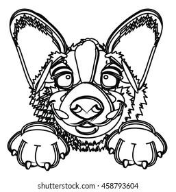 Coloring muzzle puppy welsh corgi