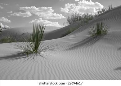 Colorized Desert