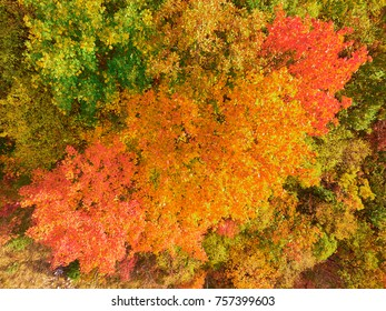 The colors of the autumn. Aerial photography.