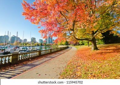 Colors of the autumn. Gorgeous sea walk in the park. Stanley Park in Vancouver. Canada.