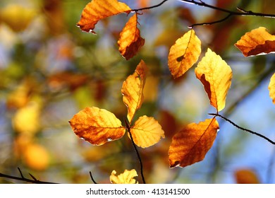 Colors of Autumn, leaves with beautiful bokeh, local focus