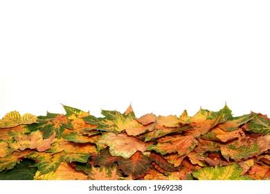 Colors foliage