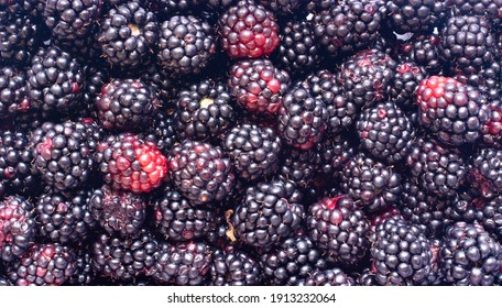 the colors of the freshly collected blackberries