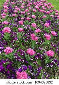Colors full flowers bloom in garden