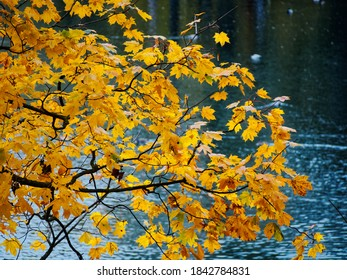 The colors of Golden autumn. Palaces and parks of the Leningrad region. Gatchina.