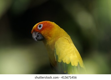 colors of handsome birds