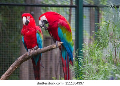Colors of macaw