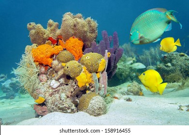 Colors of marine life underwater with tropical fish, coral and sea sponges, Atlantic ocean