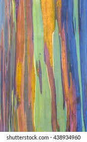 colors in nature, bark of a tree in Hawaii, the rainbow eucalyptus