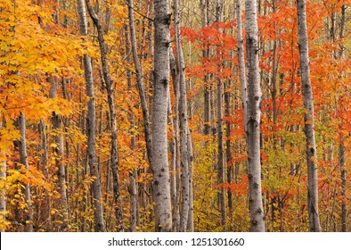Colors Of A Northern Forest
