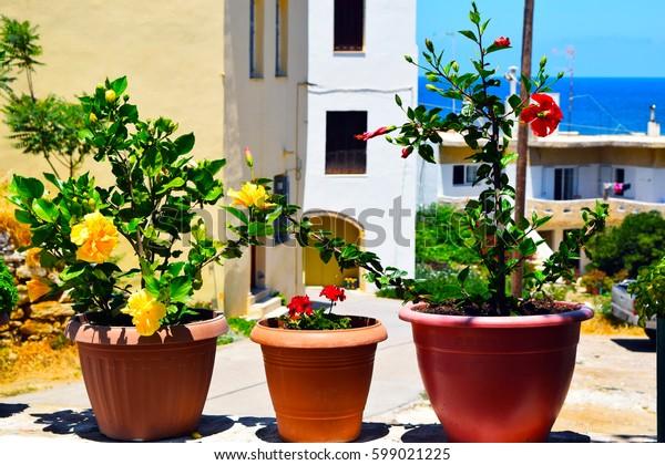 Colors in Pots