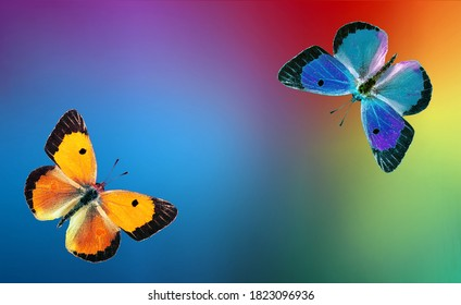 colors of rainbow. colorful multicolored butterflies on blurred colored background