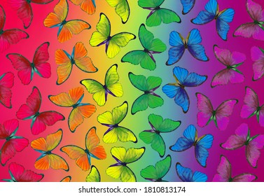 Colors of rainbow. Pattern of multicolored morpho butterflies