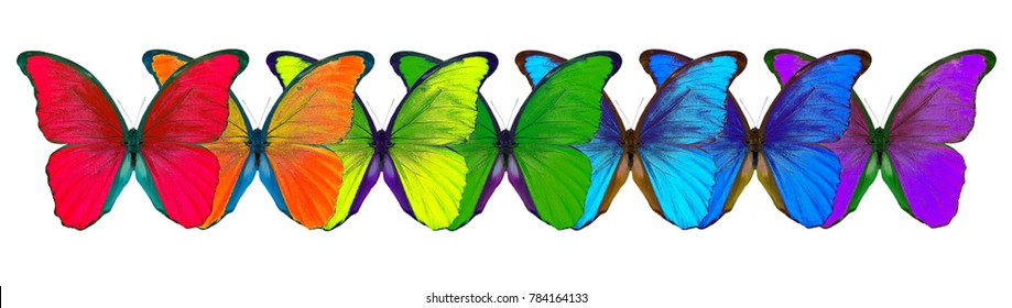 colors of rainbow. seven butterflies morpho rainbow colors.
