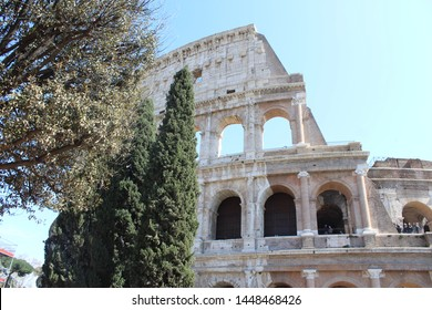 coloseum with trees italy rome