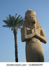 Colossus of Ramses II - Karnak with palm tree, Egypt
