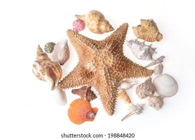 colour beautiful sea cockleshells and starfish