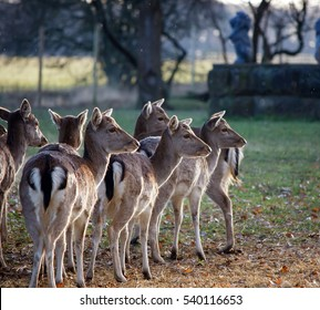 colour group of young deer gathering as rain falls