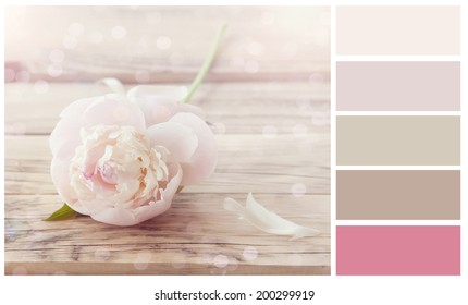 Colour palette with complimentary swatches. Pastel flower