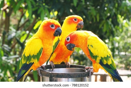 a colour of parrot