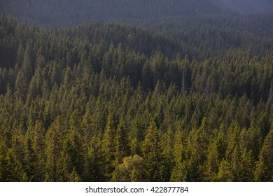 Colour picture of a forest in the mountains