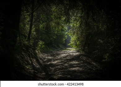 Colour picture of a path in a dense forest