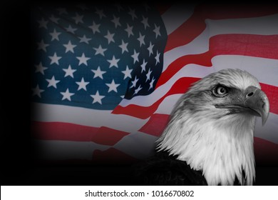 Colour poster American flag with blakc and white eagle.