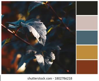 Colour swatch. Autumn color palette. Harmonious colour combinations.