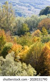 Coloured autumn foliage Gran Sasso Parco Nazionale Abruzzo Italy
