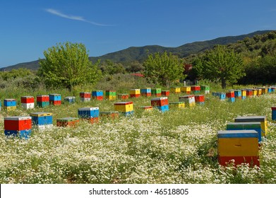 Coloured beehives in the middle of a meadow