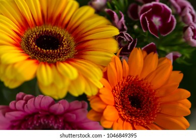 The coloured flowers in a nice focus