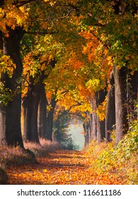 Colourful autumn alley
