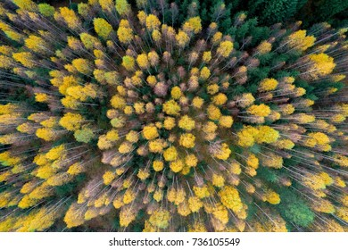 Colourful autumn colours in forest form  above, captured with a drone.