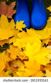 Colourful autumn foliage and blue rain boots. Maple leaves.