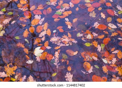 Colourful autumn leafs in pond
