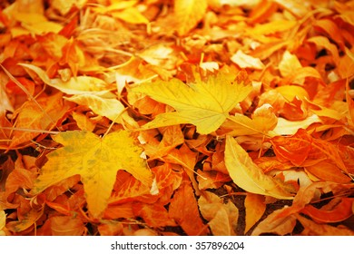 Colourful autumn leaves background, close up